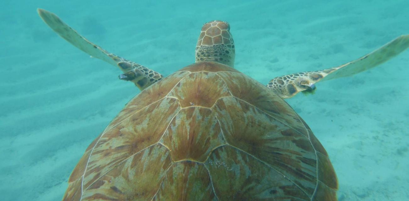 Marine life thrives in the Bahamas
